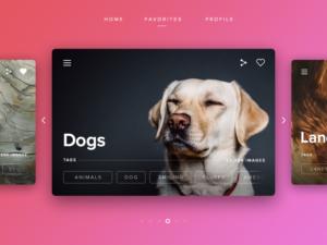 modern slider website dog pink